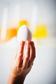 A hand holding an egg up in front of laboratory flasks of egg yolk, egg white and mixed egg