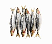 Six sardines in a row