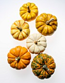 Six pumpkins on white background, high angle view