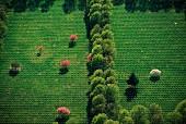 Grüne Felder mit blühenden Bäumen