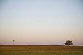 Lone Windmill and Tree on Rural Field, Texas, USA