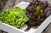 Red and green lettuce in a crate