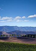 Weinberg vor prachtvoller Landschaft