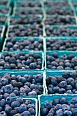 Fresh Picked Blueberries