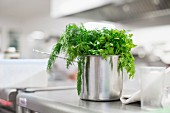 Fresh herbs in a stainless steel pot in a kitchen