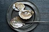 Fresh oysters on a pewter plate