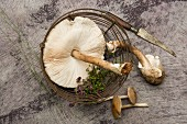 Fresh parasol mushrooms and majoram