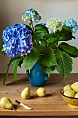 A bouquet of Hydrengers in a blue vase with fresh pears on a wooden table.