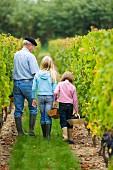 Familie bei der Weinlese im Weinberg des Chateau de Chantegrive, Podensac, Gironde, Frankreich