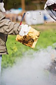 Beekeepers Smoking Beehive to Remove Honeycombs