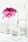 Pinkfarbene Rosenblüte im Wasserglas neben Wasserflasche