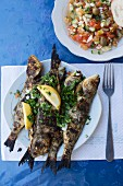 Cooked fish on plate, Djerba, Tunisia