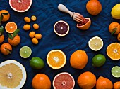 Overhead of cut and whole grapefruits, oranges, lemons, limes and kumquats on a dark blue material with a blood orange juiced with a wood reamer