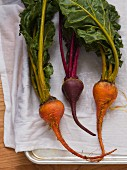 Red and golden beets with greens drying in a pan on a white kitchen towel