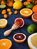 Blutorange mit Zitruspresse, umgeben von Grapefruit, Zitrone, Limette, Kumquat und Orangen