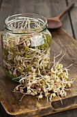 Bean sprouts in a sprouting jar and on a wooden board