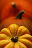 Orange and yellow pumpkins (close-up)