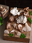 Various fresh edible mushrooms from Asia