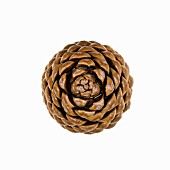 A pine cone (seen from above)