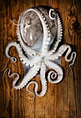 A fresh octopus on a wooden surface