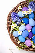 Blue and purple Easter eggs with spring flowers in a wicker basket