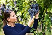 Marica Bonomo in vineyard of Monte del Frà, Fumane, Veneto, Italy (Amarone della Valpolicella)