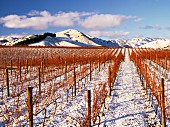 Snow on vineyard of Ballochdale Estate in the Upper Awatere Valley, Marlborough, New Zealand