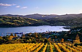 Vanstone Vineyard above Akaroa and its harbour in the volcano crater, Canterbury, New Zealand