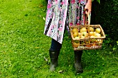 A woman holding a basket of freshly picked apples
