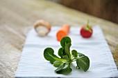 Ein Pflänzchen Feldsalat auf Serviette, im Hintergund Gemüse