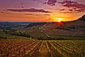 Weinberge im Sonnenuntergang, Jura, Frankreich