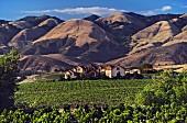 Weingut mit großem Weinberg, Kalifornien, USA