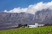 Vergelegen Weingut und Weinberg vor den Hottentotten Holland Bergen (Somerset West, Western Cape, Südafrika)