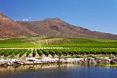 Vineyards of Viljoensdrift above the Breede River. Robertson, Western Cape, South Africa. [Breede River Valley]