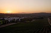 Vineyards of Kleine Zalze with the sun setting over Cape Point (left) and Table Mountain (right). Stellenbosch, Western Cape, South Africa. [Stellenbosch]