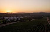 Weinberge von Kleine Zalze bei Sonnenuntergang (Stellenbosch, Western Cape, Südafrika)