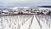 Snow blankets the vineyards and village of Avize, Marne, France. [Côte des Blancs / Champagne]