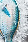 A parrotfish