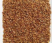 Coriander seeds seen from above