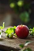Frischer roter Apfel und Zierapfelzweig auf Holzbrett im Garten