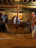Pferd treibt Mühlstein für eine Presse an