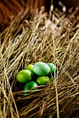 Green Easter eggs in straw