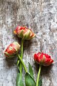 Three tulips on wooden surface