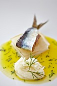 Herring with mashed potatoes and dill sauce