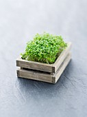 Fresh cress in a little wooden crate