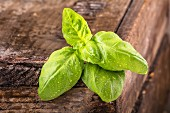 Basil on an old wooden table