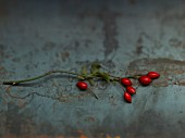 A sprig of rose hips on a metal surface