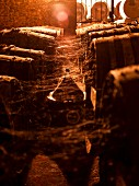 Old cognac barrels with spiderwebs in a wine cellar