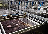 Pigeage Maschine auf Gärtank mit Pinotage im Weingut von Nederburg, Paarl, Südafrika