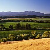 Weinberge von Little Beauty im Waihopai Valley, Marlborough, Neuseeland
